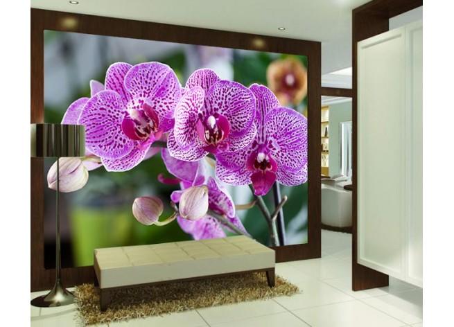 Фотообои Красивые фиолетовые орхидеи фаленопсис