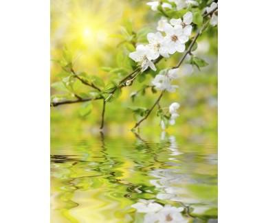 Фотообои Весенние цветы над водой