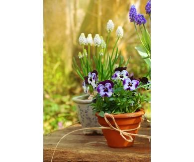 Фотообои Весенние цветы в горшке