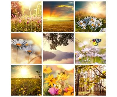 Фотообои Цветочный коллаж