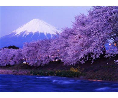 Фотообои Сад с видом на заснеженную гору Фудзи