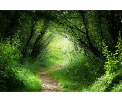 Фотообои Тропинка в лесу