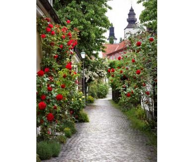 Фотообои Замечательная аллея роз в средневековом городе Висбю