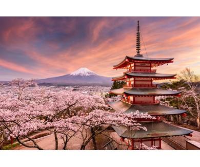 Фотообои Цветение сакуры и пагода