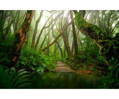 Фотообои Азиатский тропический лес