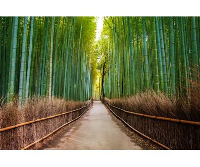 Фотообои Бамбуковый лес в Японии