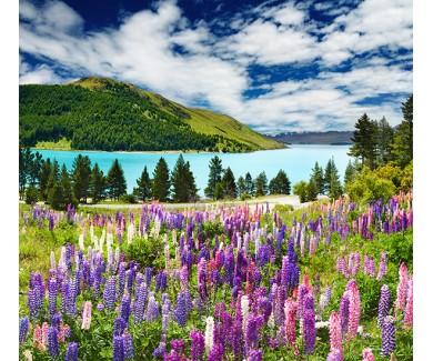 Фотообои Озеро в Новой Зеландии