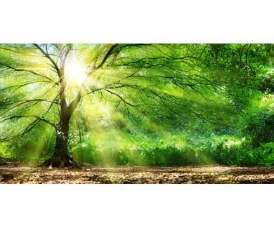 Фотообои Под сенью дерева