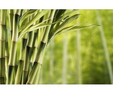 Фотообои Свежий бамбук