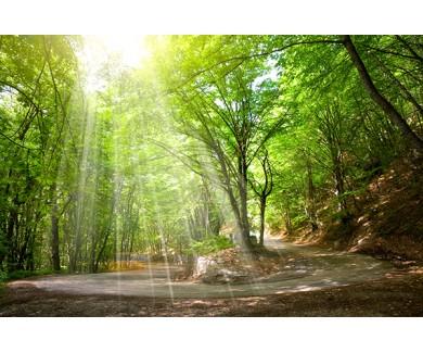Фотообои Серпантин в лесу