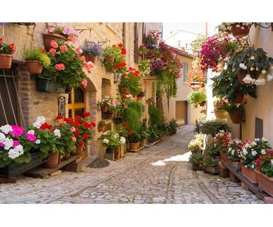 Фотообои Аллея с цветами