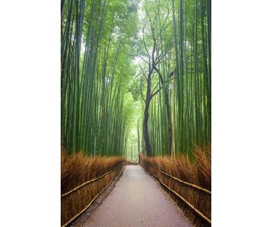 Фотообои Бамбуковая улочка