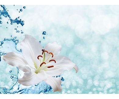 Фотообои Белая лилия на фоне брызг воды