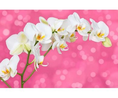 Фотообои Белая орхидея на розовом фоне