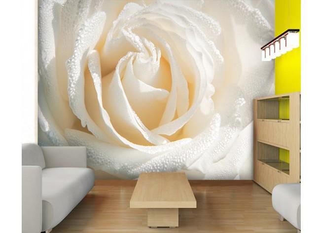 Фотообои Макро фото белая роза