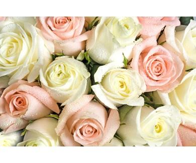 Фотообои Фон из белых и розовых роз