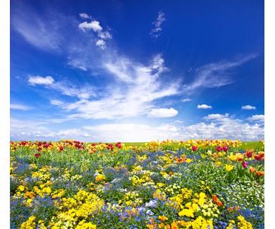 Фотообои Цветы над голубым небом