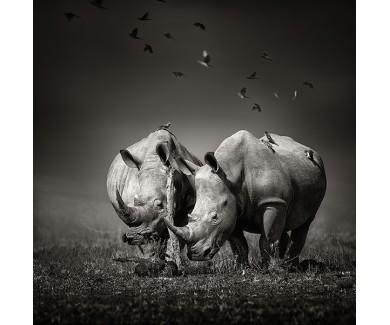 Фотообои Носороги