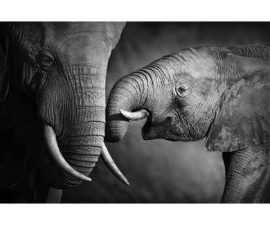 Фотообои Семья слонов, фото