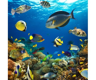 Фотообои Обитатели морского дна