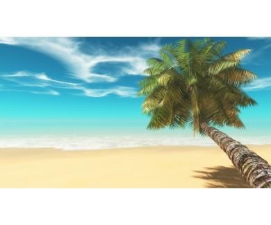 Фотообои Пальма у моря