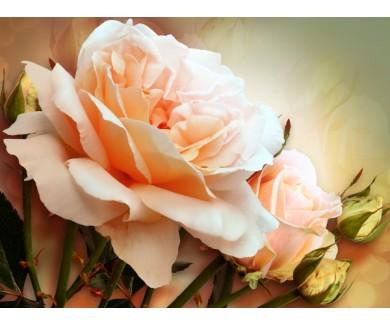 Фотообои Розы, живопись