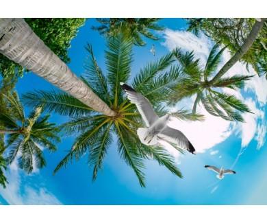 Фотообои Вид на пальмы снизу