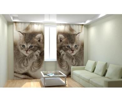 Дымчатый котенок