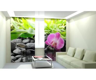 Несравненная орхидея