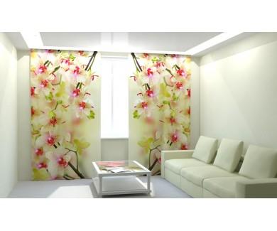 Воздушные орхидеи