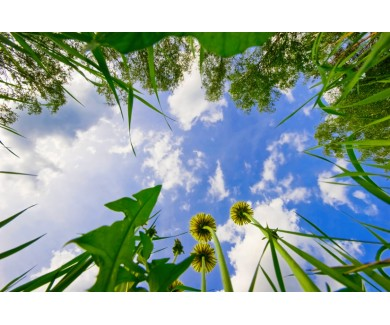 Фотообои Вид из травы на небо