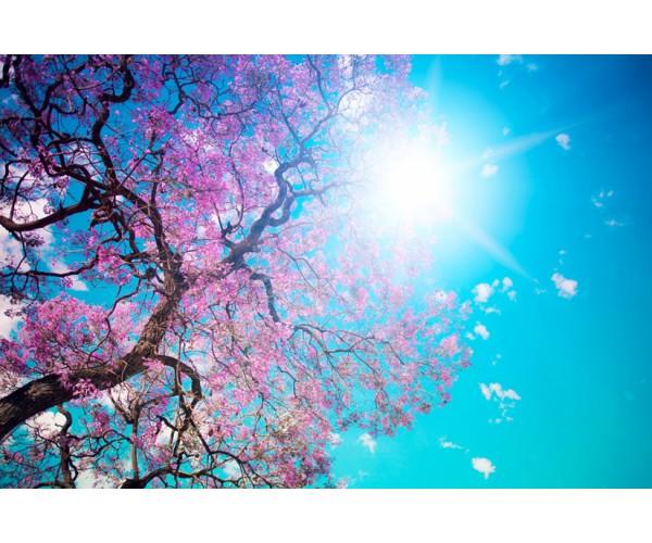 Фотообои Солнечный весенний день