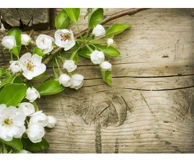 Наклейка на пол Ветка цветущей яблони