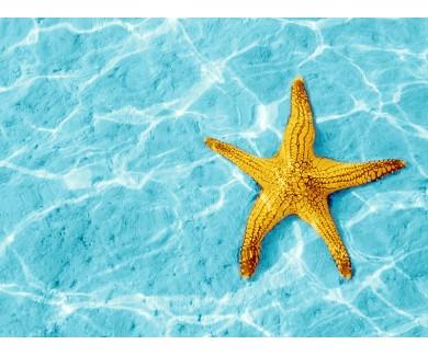 Наклейка на пол Желтая морская звезда