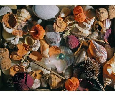 Наклейка на пол Натюрморт из камней, ракушек и др